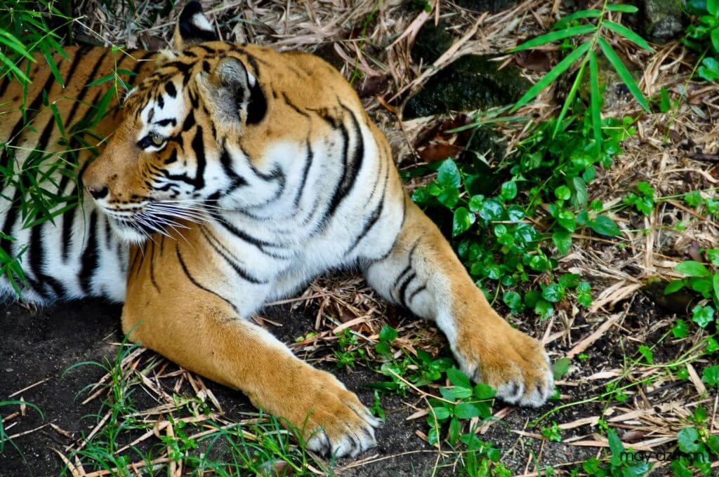 ジョホールバル観光⑤ジョホールバル動物園