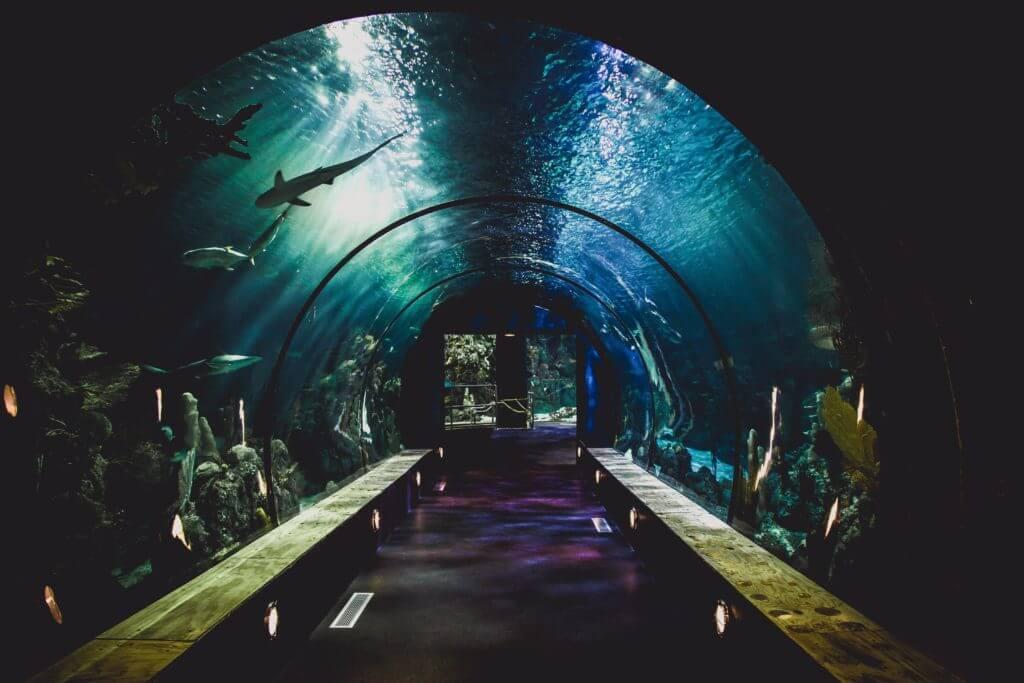 クアラルンプール観光④:KLCC水族館