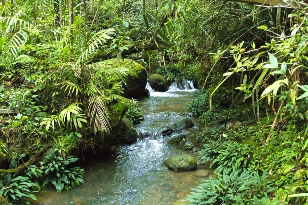 マレーシア世界遺産 キナバル自然公園
